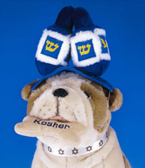 Jewish Plush Pet Toy - Dreidel Hat