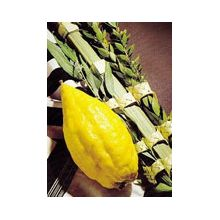 Etrog & Lulav Set - High Quality